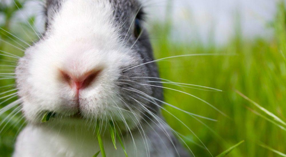 certificado PETA cruelty-Free and Vegan