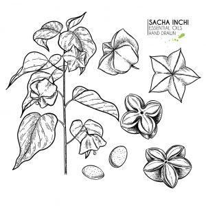 sacha-inchi-omega-3